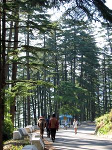 The narrow winding roads of Dhanaulti