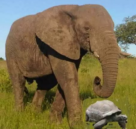 THE TORTOISE CAPTURES THE ELEPHANT 1