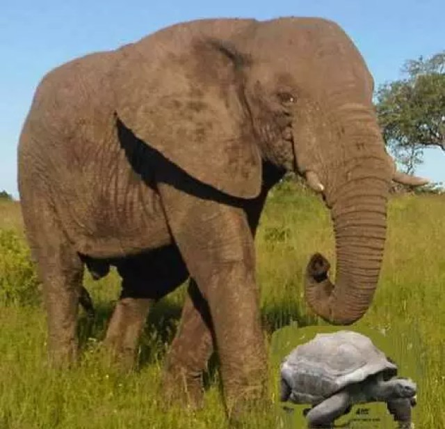 THE TORTOISE CAPTURES THE ELEPHANT 2
