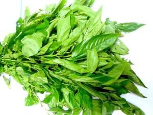 EWedu leaf