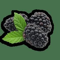 פטל שחור ארומה יין
