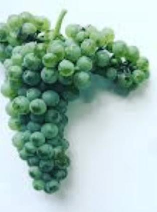 ענב יין