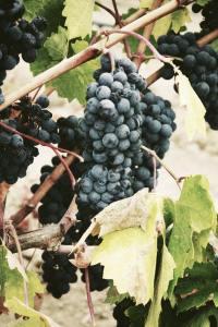 יין וענבים