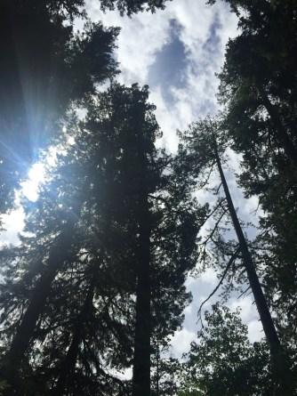 onp_tree-sky