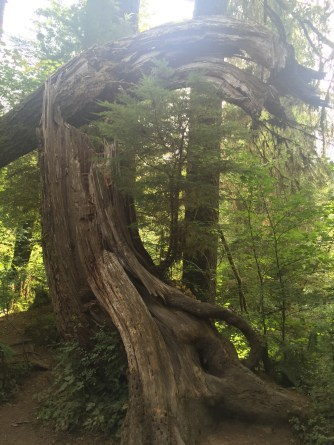 onp_trees