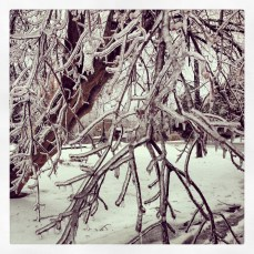 Ice encrusted tree branches