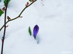 April Snow, photo by mzrosie