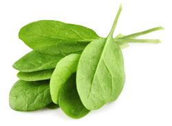 269143-spinach