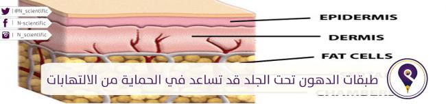 طبقات الدهون