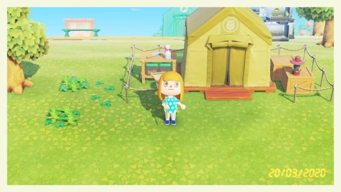 Das Bild zeigt das Museumszelt am zweiten Spieltag in Animal Crossing: New Horizons.