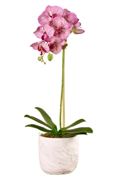Bloomr Small Orchid Marbled Planter Decoration, $69-149