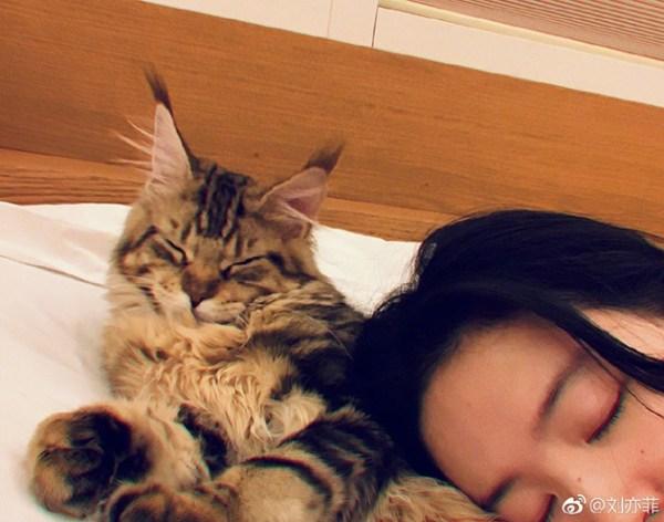 刘亦菲和猫咪