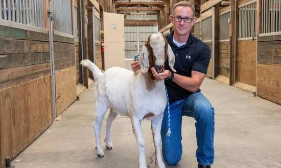 """華盛頓大學生殖生物學家Jon Oatley 在給一頭山羊""""代父""""餵食。 圖片來源:Bob Hubner, Washington State University"""