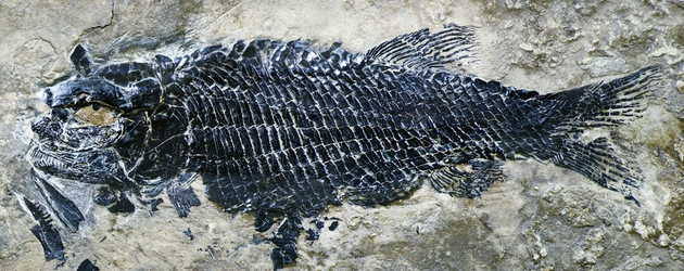 ff08 bd0b6dd6f4357a98e8f78eda4e268d15 - The world's oldest rib scale cleft toothed fish was found in Yunnan, the first in Asia