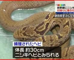 ニシキヘビ シマヘビ 新幹線