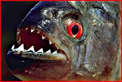 ピラニア 釣り選手権