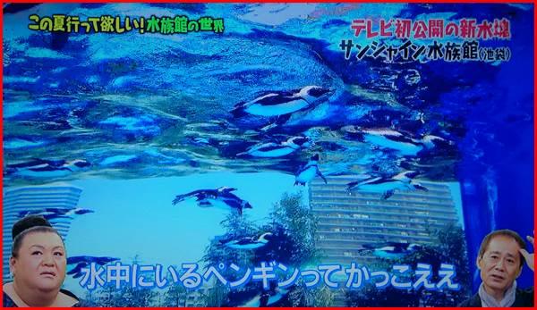 天空のペンギン サンシャイン水族館 マリンガーデン