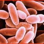 リステリア菌汚染メロンの原因や症状は?妊婦が感染した場合や治療法についても