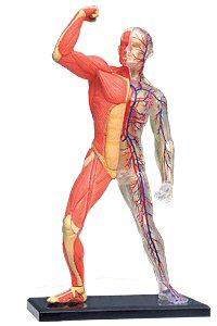 גוף האדם, מתוך אתר החברה