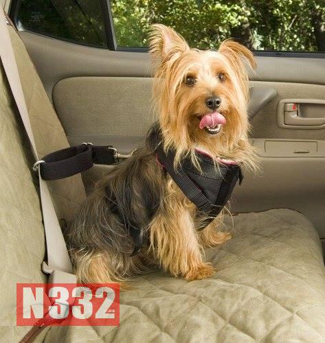 Carrying Animals in Cars (2)