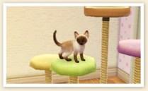 nintendogs_cats_r-15