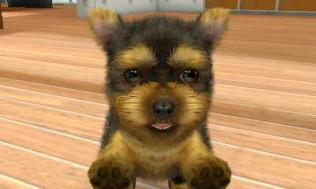 nintendogs__cats-20