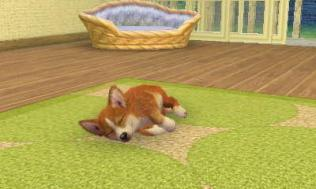 nintendogs__cats-5