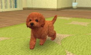 nintendogs__cats-8