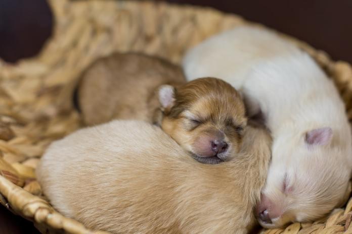 mart-Pups