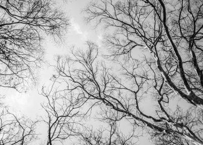 Tree Stories