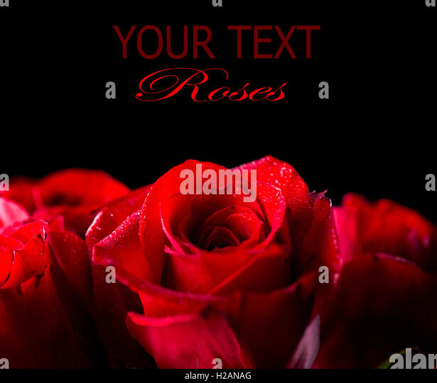 Red Roses On Black Background Stock Photos Amp Red Roses On