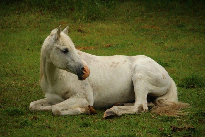 Конь валяется