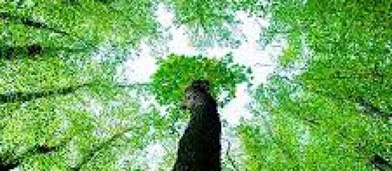 вред кальяна для здоровья человека