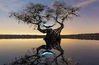 необычный бассейн