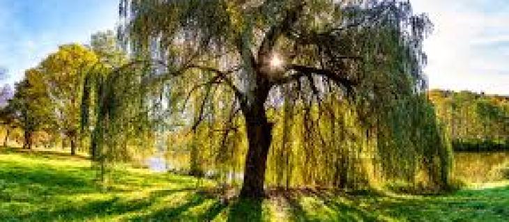 Гималаи самая высокогорная область Земли, которая занимает часть территории сразу нескольких стран: Китая, Непала, Индии, Пакистана и Бутана. Всем известно название ее самой высокой точки — это гора Эверест, выше которой нет на нашей планете ничего, кроме верхних слоев атмосферы. Местное население Жители Непала называют гору Сагарматха, а Тибета Джомолунгма, и оба эти варианта связаны с обожествлением высочайшей вершины мира. В отличие от местных названий, английский вариант всего лишь фамилия человека, руководителя геодезической службы в колониальных владениях Великобритании Британской Индии. Именно под началом Джорджа Эвереста работал индийский математик Радханат Сикдар, в 1852 году сумевший с помощью вычислений измерить высоту «Пика XV» (условного названия горы в ряду других гималайских вершин) и доказать, что он и есть высшая точка планеты. Гималаи – мечта альпнистов Наверное, после того, как распространилась по миру эта информация, о покорении пика стали мечтать многие альпинисты. Оказаться на самой высокой точке мира это звучит фантастически, невероятно и притягательно. В те годы это и было фантастикой. Заранее можно было предсказать очень низкую температуру воздуха она понижается в среднем на 6 градусов каждые 1000 метров по вертикали. Даже если отправиться наверх жарким летом, то с +30 градусов к 8000 метров похолодало бы до -18. Фактически намного больше, потому что тепло от нагретой солнцем земли сюда уже не дойдет, а белый снег и лед будут эффективно отражать солнечные лучи, если те попытаются нагреть гору сверху. Сильные ветры на вершине отлично видны и невооруженным глазом в виде «флагов» потоков снежинок, сдуваемых могучим напором воздуха. Никакой космической съемки в те годы не было, так что искать и прокладывать маршрут приходилось опытным путем. И самое главное кислород. Он в воздухе высокогорья, конечно, есть. Но сам воздух настолько разрежен, что, начиная примерно с высоты 7000 метров, это становится смертельно опасным для человеческой жизни. Пост