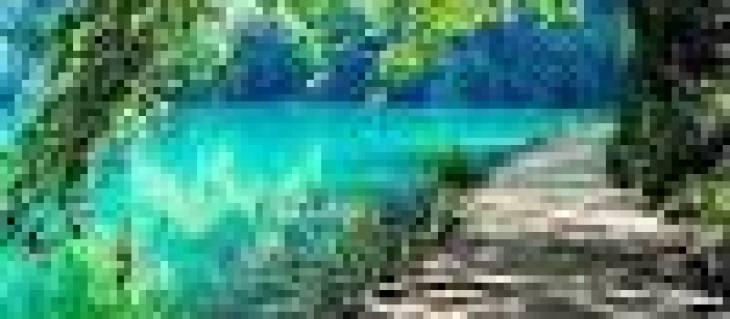 посадка крупномеров деревьев, деревья крупномеры