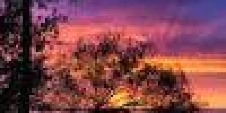 чем питаются бабочки в природе