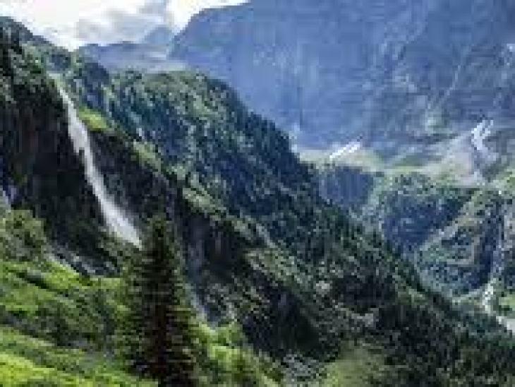 Какая птица самая быстрая