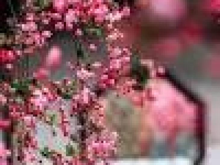 как избавиться запаха кошачьего туалета, кошачий запах в квартире как избавиться, кошачий как избавиться от запаха кошачьей мочи на линолеуме