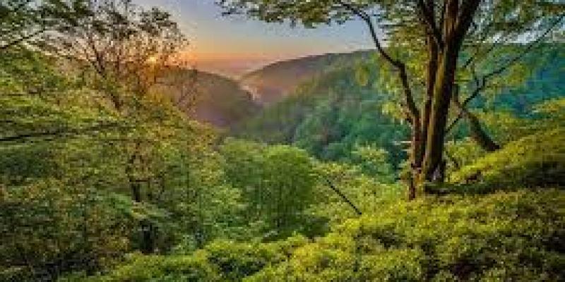 уход за деревянной мебелью, уход за мебелью из дерева