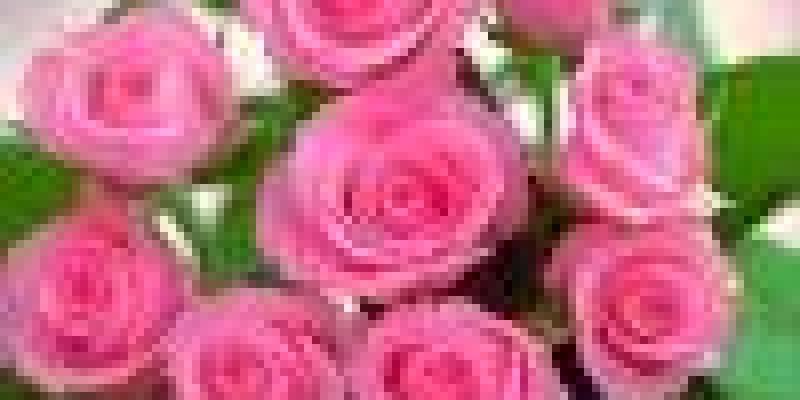 роль отца в воспитании ребенка, роль отца в воспитании ребенка дошкольного возраста