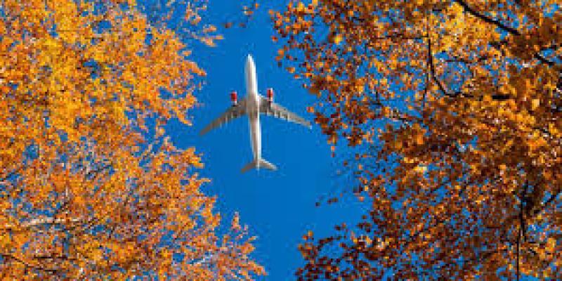 авокадо фрукт польза