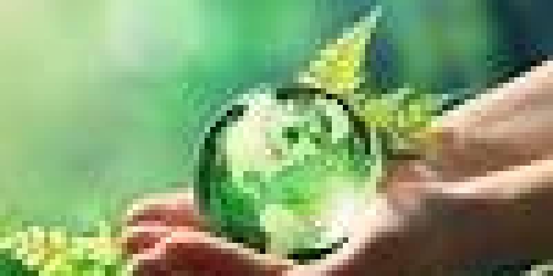 разновидности чая, черного, пуэр