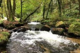 как заваривать листовой чай, как заваривать гранулированный чай