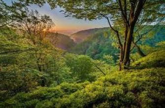чай с шиповником польза, польза, вред, для детей, рецепт