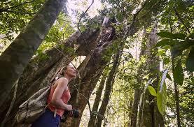 чай с чабрецом польза, вред, для женщин, для мужчин