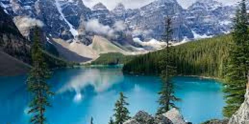 какой газон выбрать для дачи, рулонный, сеянный