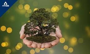 как вырастить эустому из семян, в домашних условиях