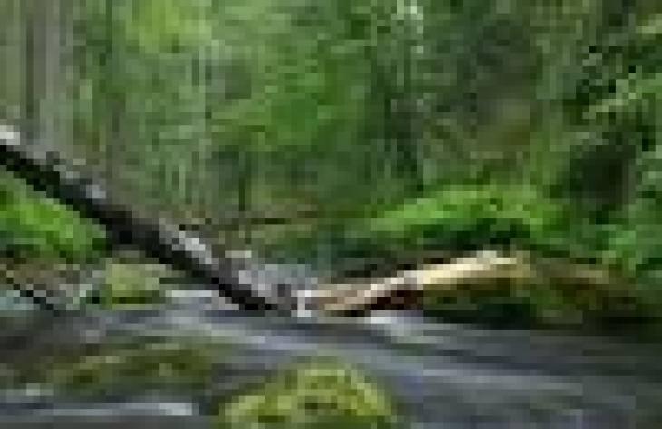 Дети Индиго – кто они: 3 гипотезы появления детей Индиго