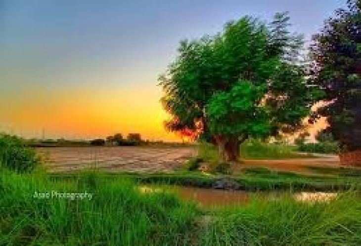 чистота бриллианта, дефекты, таблица, минерал